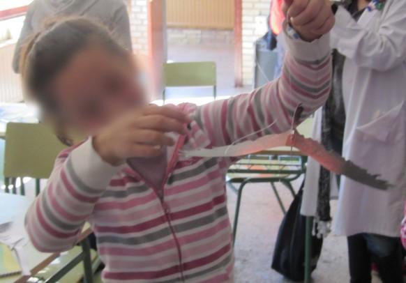 Taller medioambiental sobre las aves  en los colegios Tierra de Campos Araduey Campos